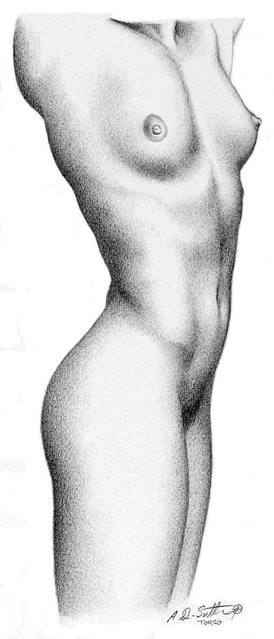 nude pencil drawing of female torso